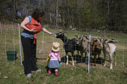 Beatrice meets the goats